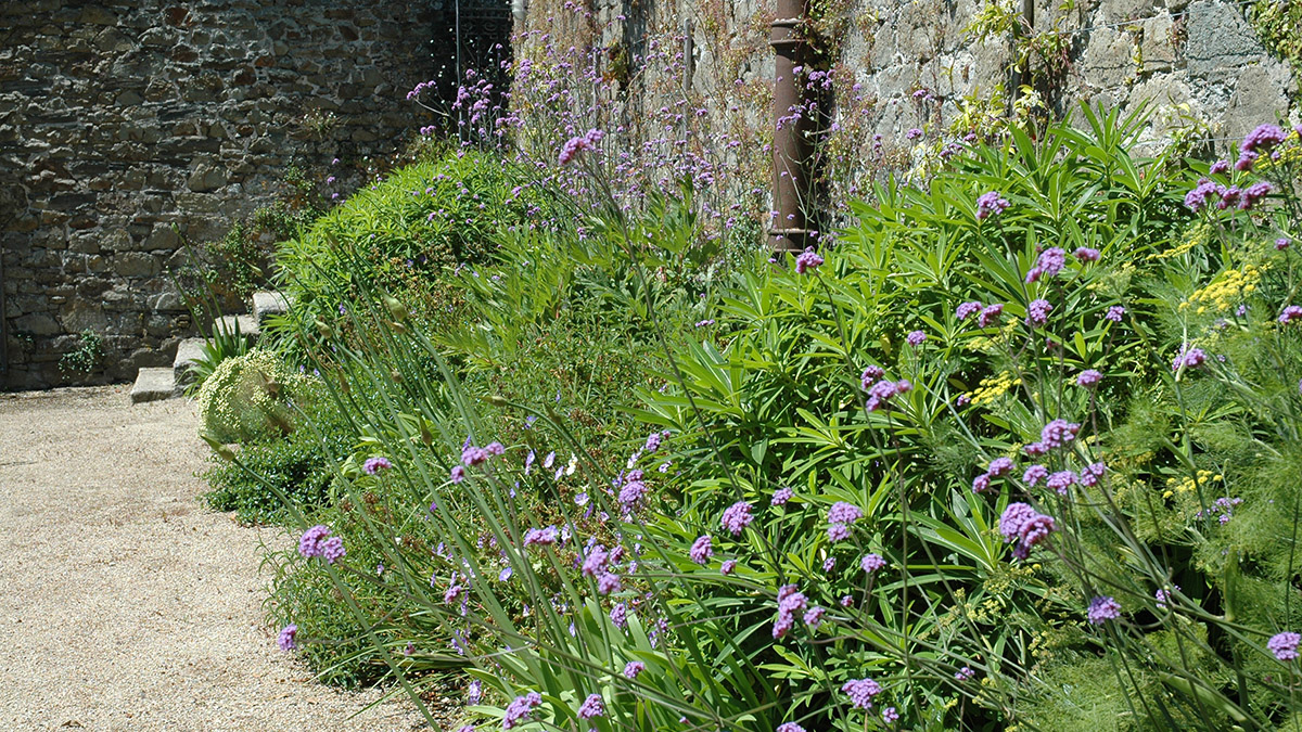 A planted border in a walled garden