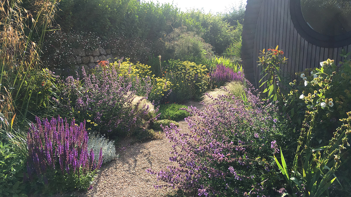 Planting either side of a gravel path in a garden
