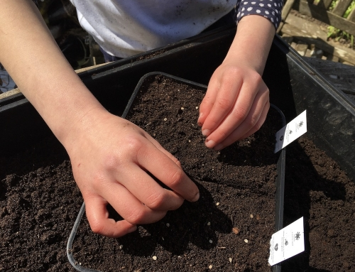 Childs Play: 12 simples tips for gardening with kids