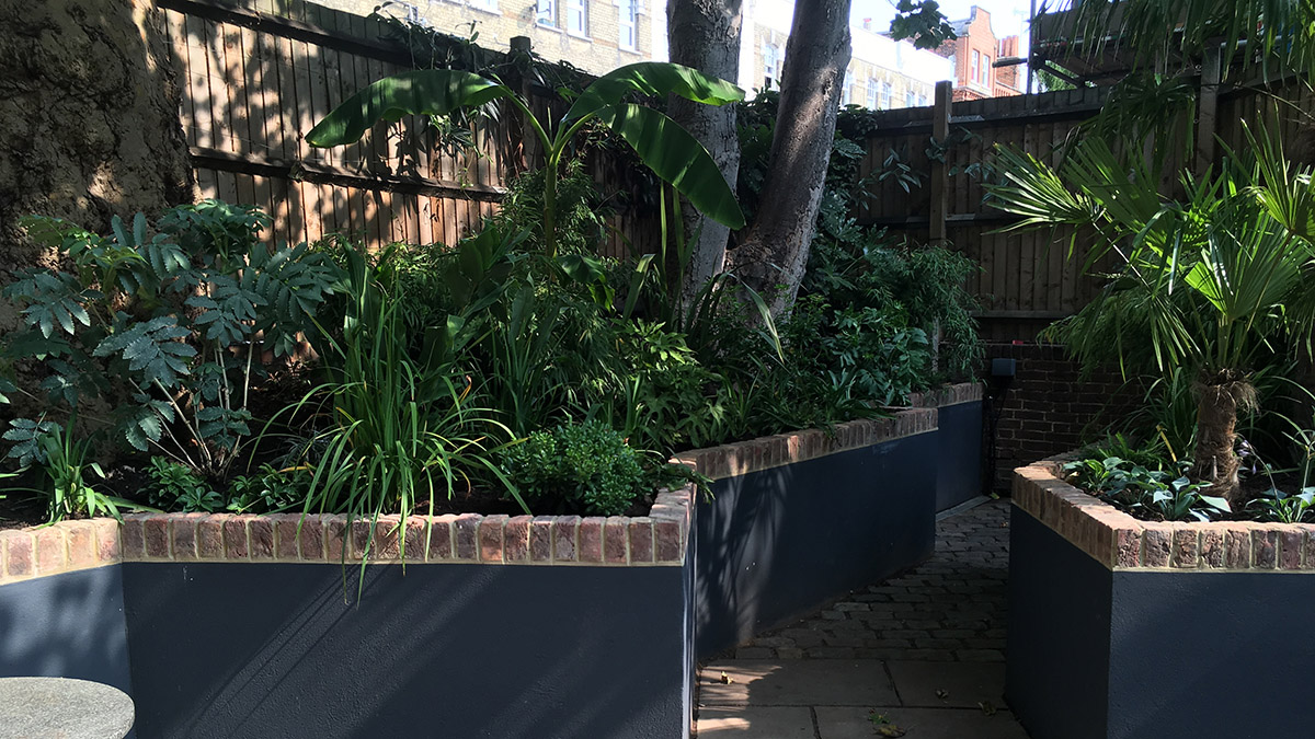Planted raised beds in a tropical urban garden