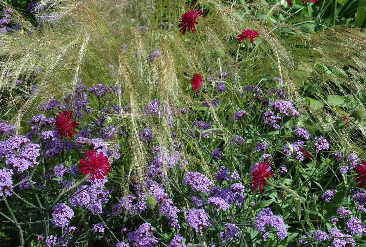 Combination of grasses and complimentary flowers